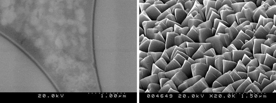 sem microscopy